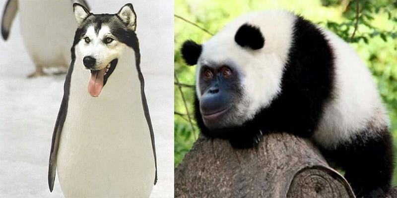 Choáng với những sinh vật lai tạo vừa được Photoshop phát hiện