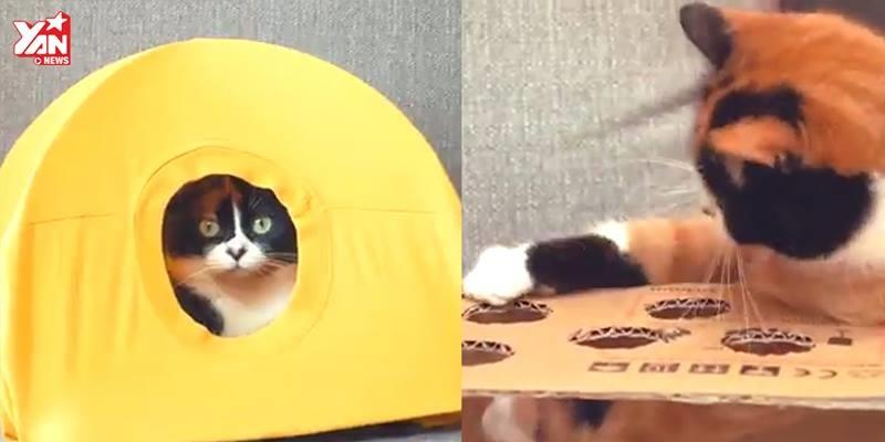 Nếu bạn nuôi mèo, đây là những vật dụng cần phải mua ngay