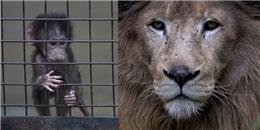 Ám ảnh loạt hình động vật những ngày cuối cùng tại sở thú