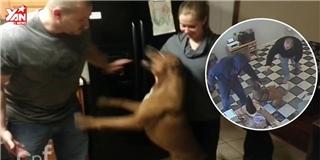 Cận cảnh khoảnh khắc chó cưng liều mình bảo vệ chủ