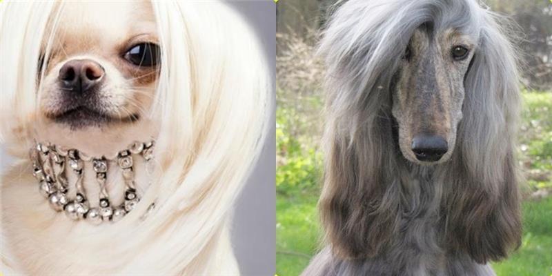 Khi tóc của cún cưng còn sành điệu hơn cả chủ