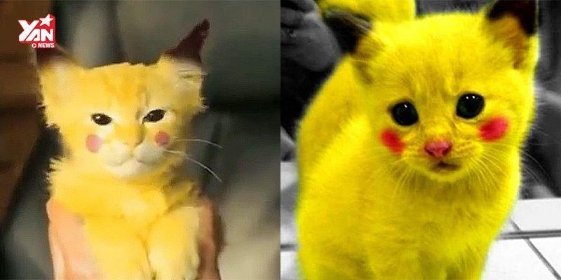 """Chết cười với các """"pikachu"""" phiên bản đời thực"""
