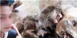 Ra oai với bức ảnh tự sướng bên bầy khỉ bị giết hại dã man