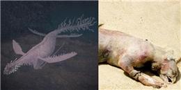 Những quái vật biển có thật từng gây chấn động toàn thế giới