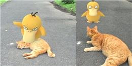 Pokemon cả gan ra đời thực 'chọc giận' một chú mèo và cái kết bất ngờ