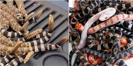 Những khoảnh khắc rùng rợn của loài rắn khiến bạn 'dựng tóc gáy'
