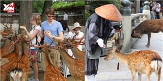 Câu chuyện về những chú nai biết cúi đầu chào ở Nhật Bản
