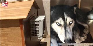 Cuộc sống sang chảnh của chú chó có máy lạnh riêng trong chuồng