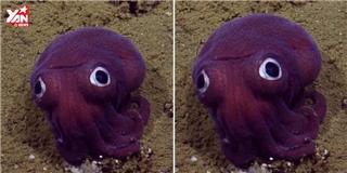 Phát hiện loài bạch tuộc mới màu tím kì lạ như pokemon