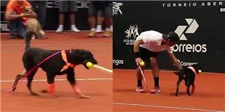 Chó hoang được nhận về huấn luyện nhặt bóng cho Olympic