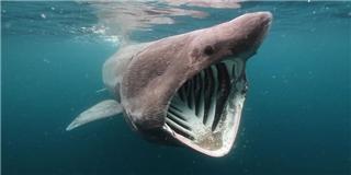 Phát hiện loài  cá mập  lạ có hàm răng  khó giải thích