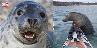 Bị cá voi săn đuổi, hải cẩu phi lên thuyền ngư dân  lánh nạn