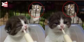 Tan chảy với chú mèo con đòi bú bình sau song sắt