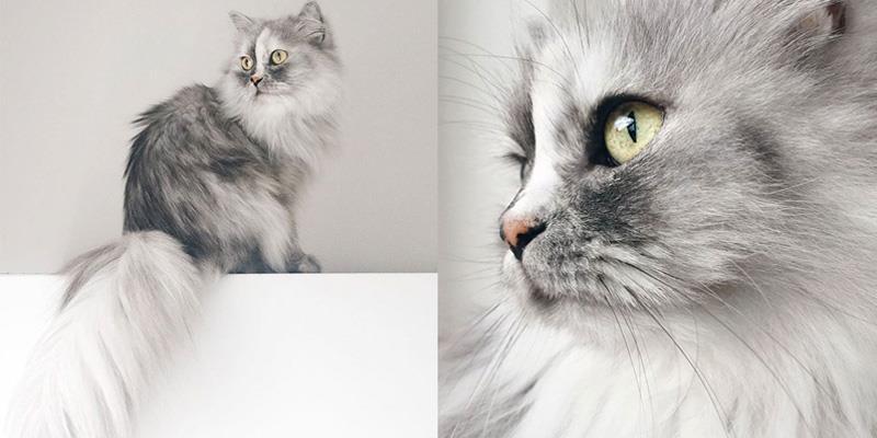"""Ngỡ ngàng với vẻ ngoài xinh đẹp của """"nữ hoàng loài mèo"""""""