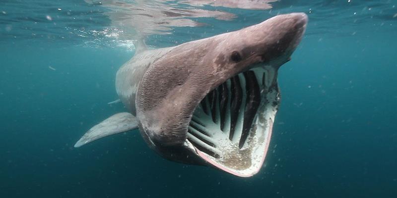 """Phát hiện loài """"cá mập"""" lạ có hàm răng """"khó giải thích"""""""