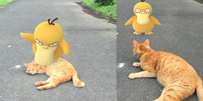 """Pokemon cả gan ra đời thực """"chọc giận"""" một chú mèo và cái kết bất ngờ"""
