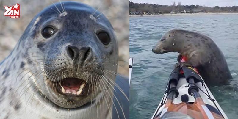 """Bị cá voi săn đuổi, hải cẩu phi lên thuyền ngư dân """"lánh nạn"""""""
