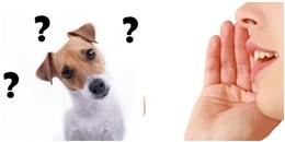 Có thật các em cún cưng hiểu hết những gì chúng ta nói?