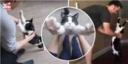 Chú mèo 'cuồng ôm' nhất thế giới chính là đây