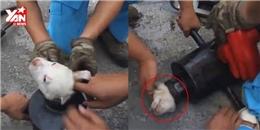 Hồi hộp với màn giải cứu chú chó mắc kẹt hi hữu khó tin