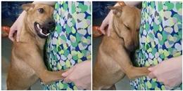Được giải cứu, đây là cách chú cún này nói lời cảm ơn…