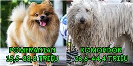Choáng với những em cún độc nhất thế giới có mức giá 'trên trời'