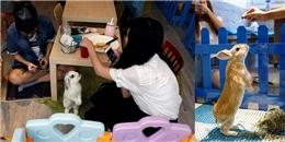 'Mê mệt' với quán cà phê thỏ siêu đáng yêu ở Hồng Kông