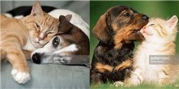 Ai bảo chó và mèo thì không thể yêu thương như tình nhân?