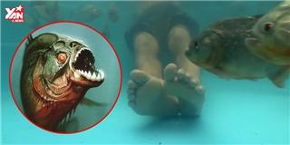 Thí nghiệm giải oan cho loài cá biệt danh 'sát thủ ăn thịt người'
