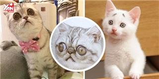 Cận cảnh 4 chú mèo có vẻ mặt  tội nghiệp  nhất quả đất