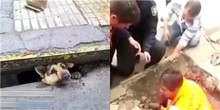 Hồi hộp xem màn giải cứu chú chó bị kẹt dưới cống suốt 4 ngày