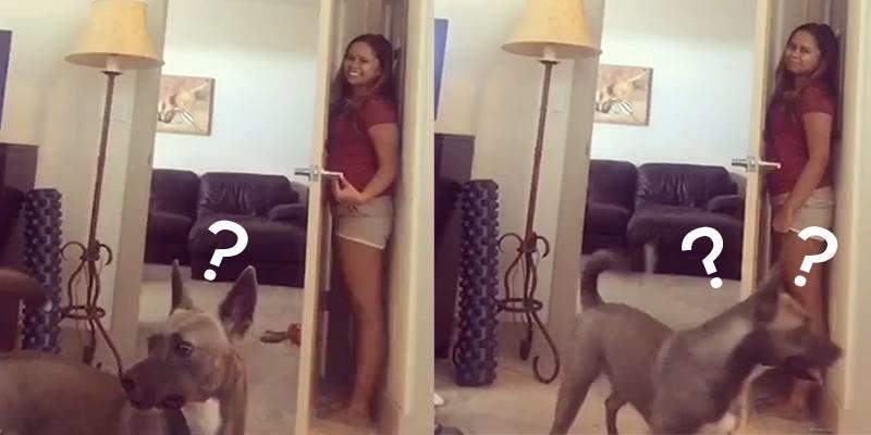 Chỉ 1 giờ đồng hồ chú chó này khiến hơn 2 triệu người bật cười