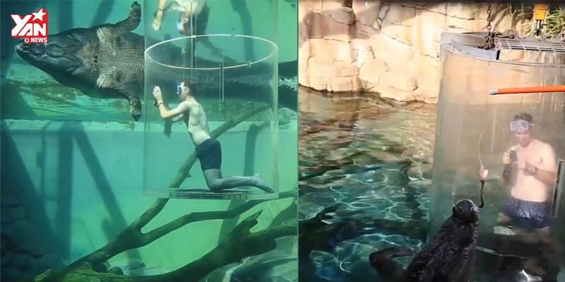 Dịch vụ bơi cùng cá sấu khổng lồ chỉ với 4 triệu đồng