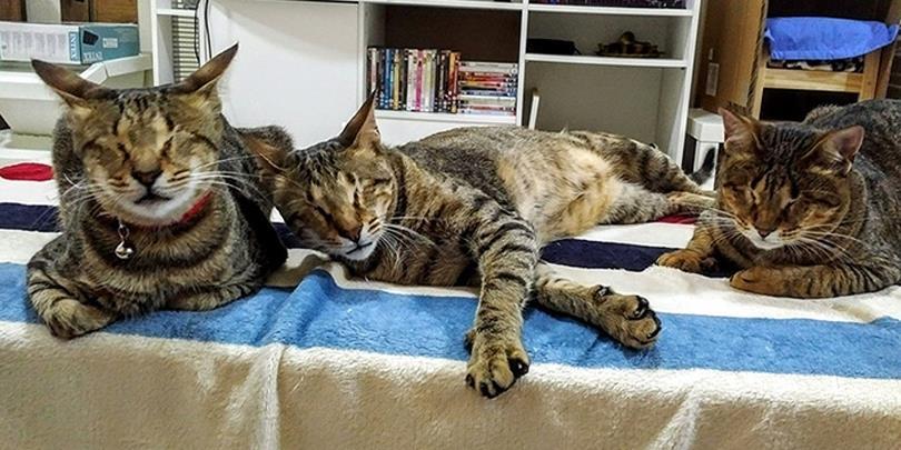 """Xúc động câu chuyện về """"tình anh em"""" của ba chú mèo hoang khiếm thị"""