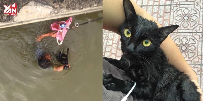 Người Sài Gòn giải cứu mèo mang thai bị chủ ném xuống sông