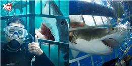 Du khách suýt mất mạng khi sử dụng dịch vụ bơi cùng cá mập