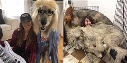 Liệu bạn có muốn nuôi một chú chó 'thiên hạ đệ nhất khủng' như cô ấy?