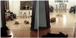 Rơi nước mắt với hành động của bầy chó mèo hoang trong lễ tang bà cụ