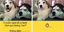 Cười nghiêng ngả với 1001 biểu cảm khó đỡ của các em cún