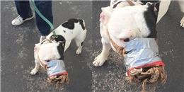 Chú chó bị chủ rọ mõm bằng băng keo và dây thừng gây tranh cãi