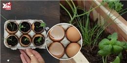 Cùng 11 triệu người học cách trồng rau sạch trong vỏ trứng gà