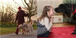 5 lợi ích sức khỏe bất ngờ khi nuôi một chú chó
