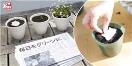 Chỉ có tại Nhật Bản: Giấy báo mọc thành cây xanh