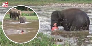 Hành động bất ngờ của chú voi con khi thấy người chết đuối