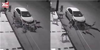 Kinh hoàng cảnh đàn chó hoang cắn nát chiếc xe hơi giữa đêm