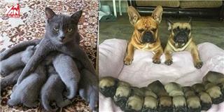 Cười đau bụng với những gia đình chó mèo vỡ kế hoạch