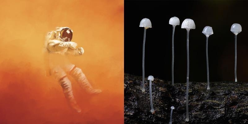 Đưa xác chết vào không gian có thể tạo nên sự sống ngoài hành tinh