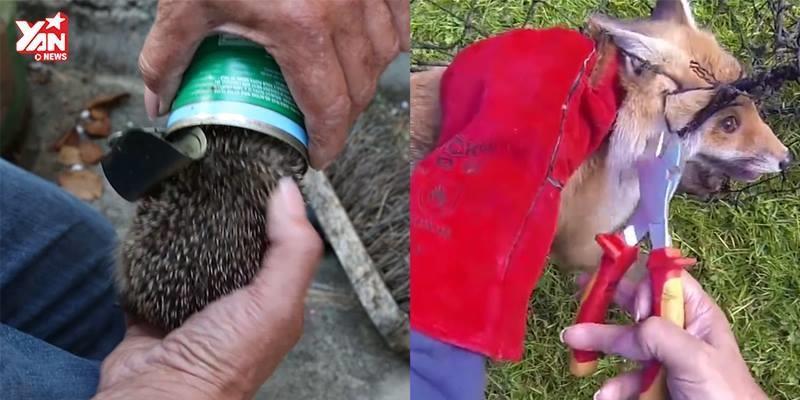 Hàng triệu người bức xúc trước cảnh giải cứu các con vật hoang dã
