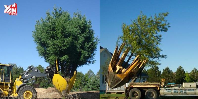 """Cỗ máy này chính là """"cứu tinh"""" của hàng triệu cây xanh trên thế giới"""