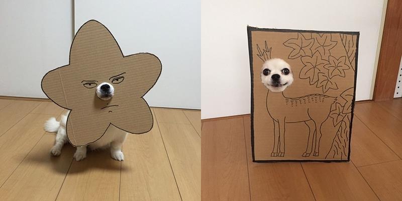 """Cười ngặt nghẽo với bộ ảnh cosplay gây sốt của """"siêu cún"""" Chihuahua"""